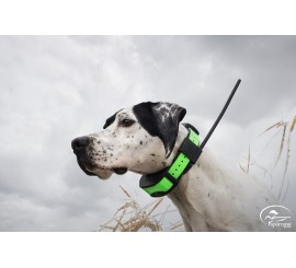 SPORT DOG TEK 1.0 EQUIPO GPS